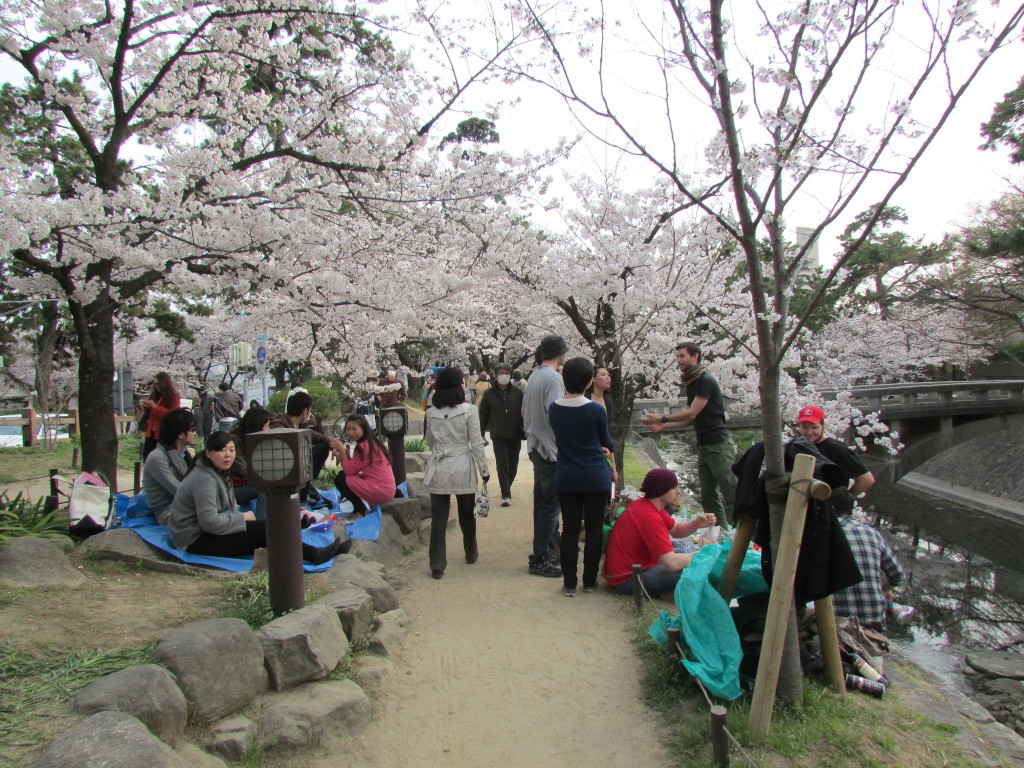 Each bank of the river in Shukugawa was lining with groups of people enjoying hanami.
