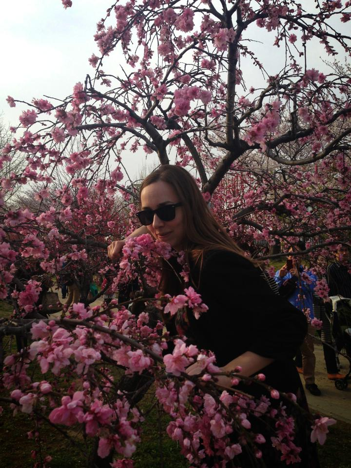 Hiding in a plum (?) tree at Osaka castle park.