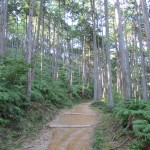 Walk like a pilgrim — hiking the Kumano Kodo