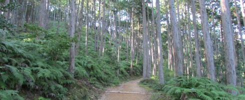 Along the Nakahechi section of the Kumano Kodo.